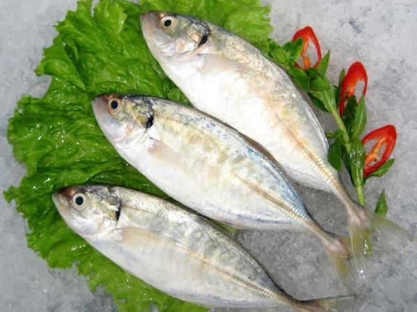 Nguồn gốc của cá bạc má