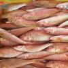 Cá Hồng Phèn Vừa có thịt thơm ngon, béo ngậy lại ngọt ngào
