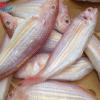Cá Hồng Tươi là loại cá có giá trị dinh dưỡng tuyệt vời