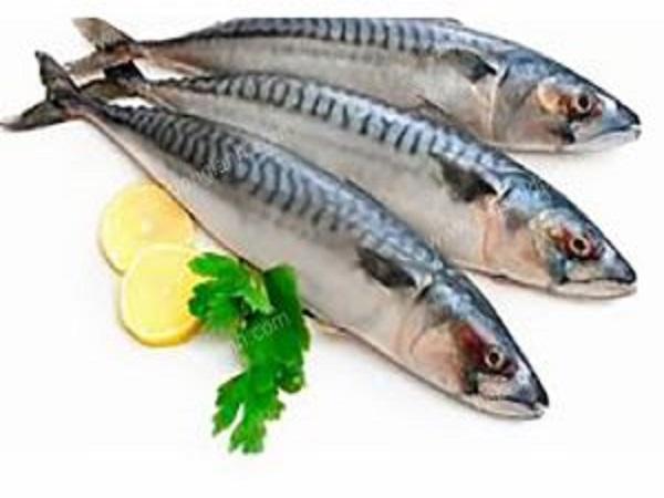 Giá trị dinh dưỡng của cá nục gai
