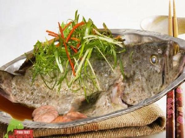 Đặc tính của cá mú