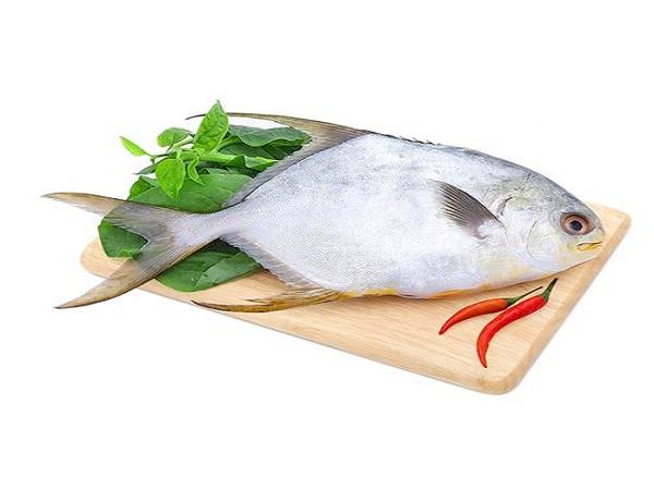 Nguồn gốc xuất xứ của cá chim trắng tươi