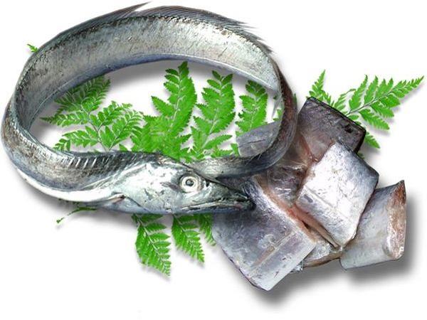 Môi trường sống của cá hố tươi