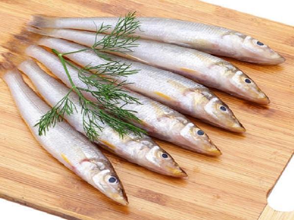 Giá trị dinh dưỡng của cá bống biển