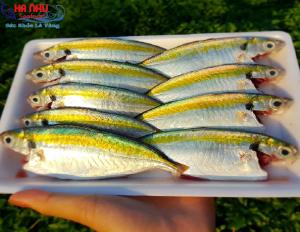 Cá Chỉ Vàng Làm Sạch – loại hải sản tuy bình dân, giá rẻ