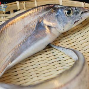 Cá Hố Tươi thân mỏng nhưng thịt cá lại chắc và khá ngọt thịt.