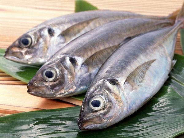 Cá biển tươi giá bao nhiêu là hợp lý - Cách mua cá biển?