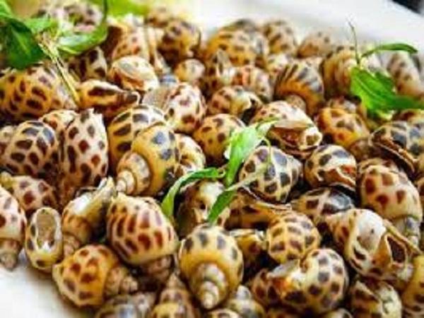 Ốc hương - Nữ hoàng của các loại ốc biển
