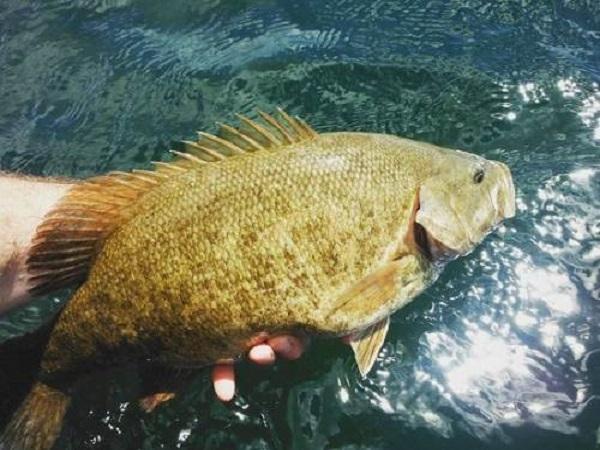 Cá vược trắng bao nhiêu 1kg? mua ở đâu?