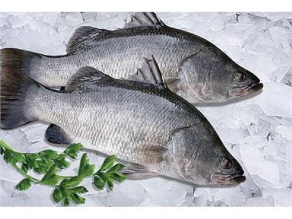 Cá vược đen là cá gì? sống ở đâu?