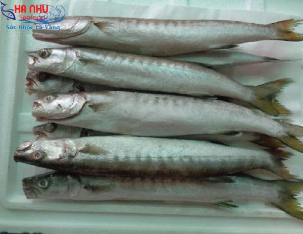 Cá Nhồng Làm Sạch có nhiều dưỡng chất bồi bổ sức khỏe