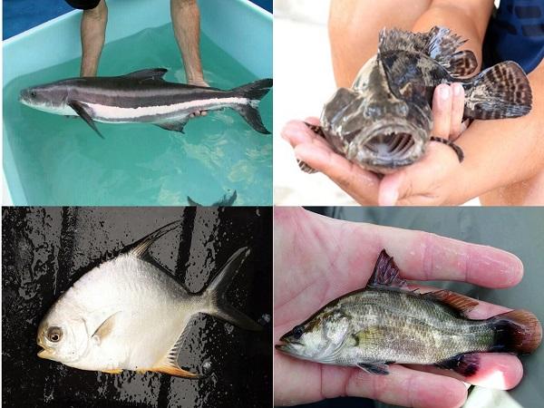 Cách mua cá biển?
