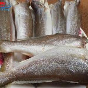 Cá Lanh 1 Nắng có độ tươi ngon, hấp dẫn và giàu dinh dưỡng