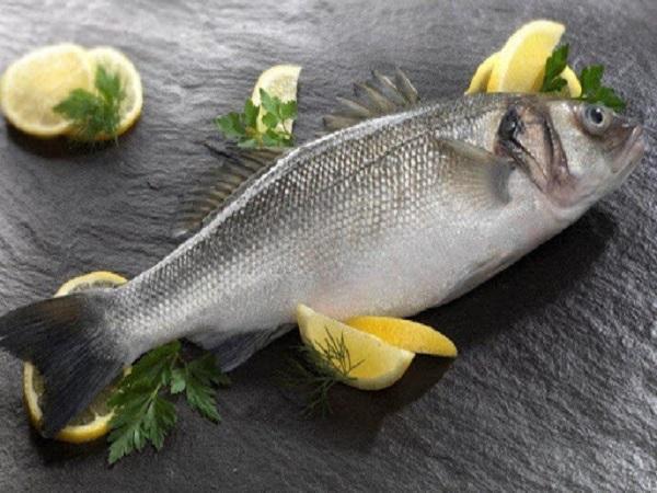 Cá vược trắng (cá chẽm) là cá gì?